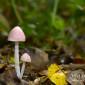 woodland fungi
