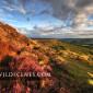 Curbar Edge ar sunset