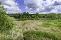 Carlton Marsh LNR Barnsley