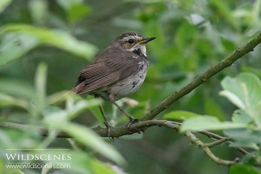 bird photography on Texel